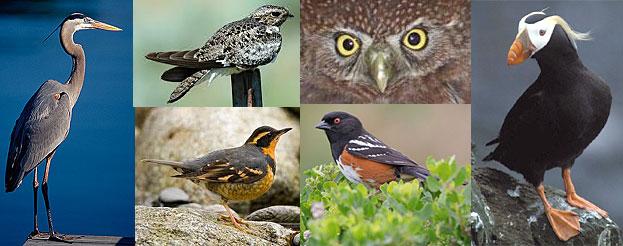 local bird variety
