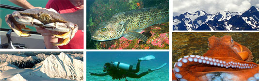 SCUBA Diving the Emerald Town Waters